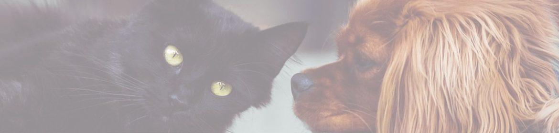 как вывести запах домашних животных