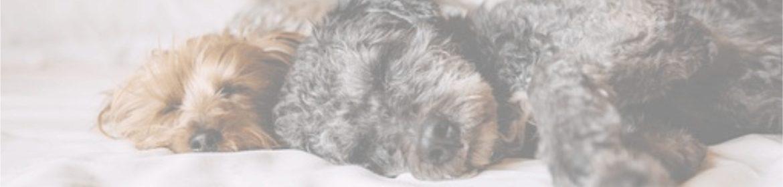 как избавиться от шерсти и ворса домашних животных дома