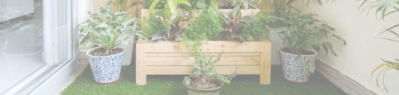 как защитить растения зимой на балконе