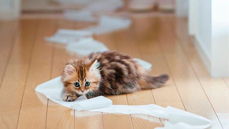 как вывести запах кошачьей мочи